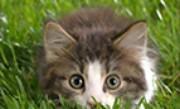 'Найди животное' - Увлекательная игра по поиску спрятанных животных.